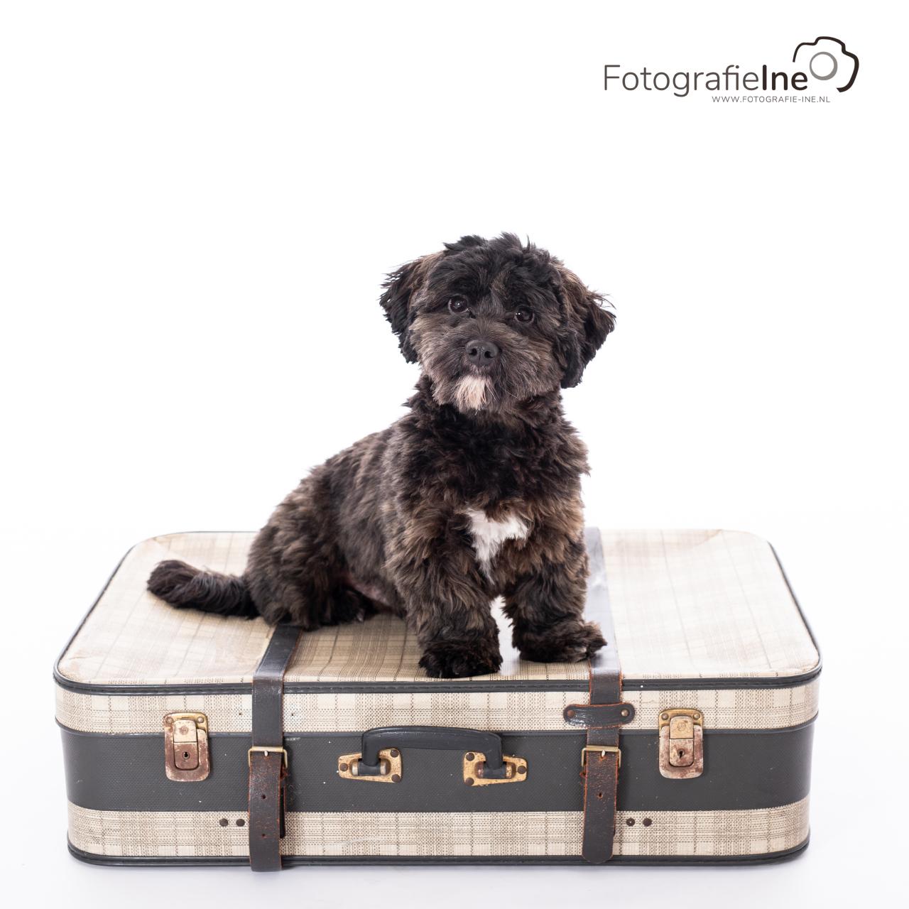 Fotografie Ine fotoshoot hond Boekel
