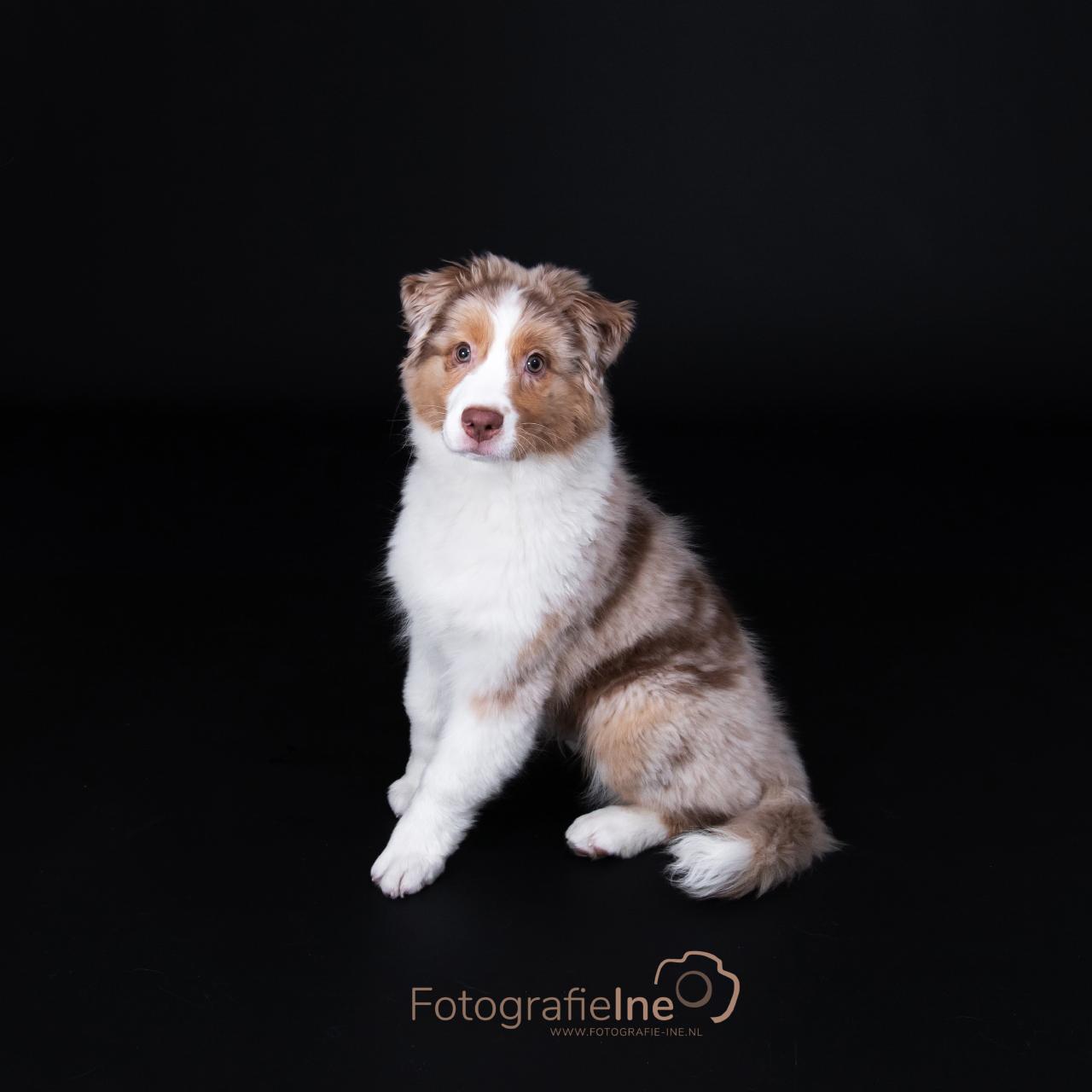 Fotografie Ine fotoshoot Boekel hond
